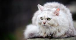 Katzenjahre in Menschenjahre