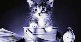 junge katzen erziehen