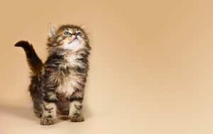 junge katzen stubenrein