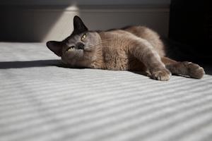 wie alt wird eine Katze